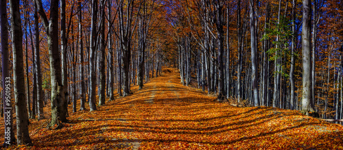 Colorful autumn trees - 95019533