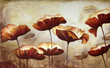Painting poppies canvas - 95025944