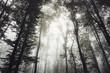 light in misty forest