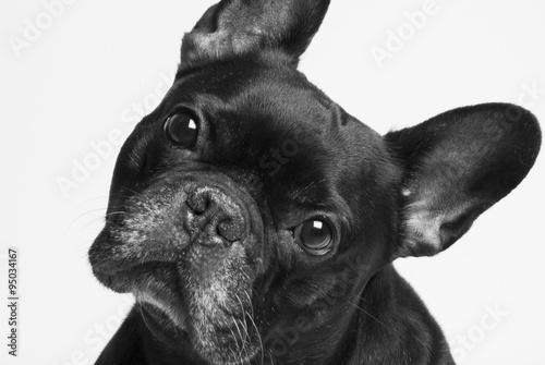 Aluminium Franse bulldog bulldog francés