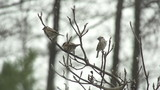SLOW MOTION: Little birds fly away from the tree