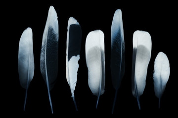 Feathers - negative image
