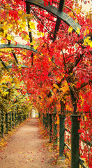 Autumn archway in the garden. © Vladimir Sazonov