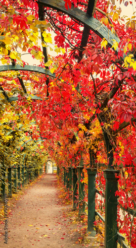 Autumn archway in the garden.