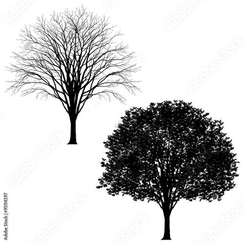 Very detailed tree in 2 versions