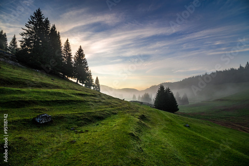 fir trees on meadow between hillsides with conifer forest in fog under the blue sky before sunrise