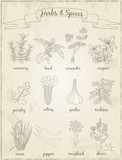 Herbs and Spices set.  Sketches. - 95119908