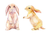 Fototapety Watercolor rabbit illustration