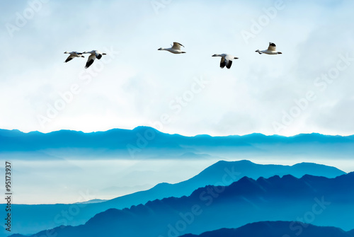 Geese flying against blue sky background - 95173937