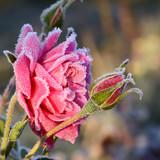 Fototapety Blumen 530