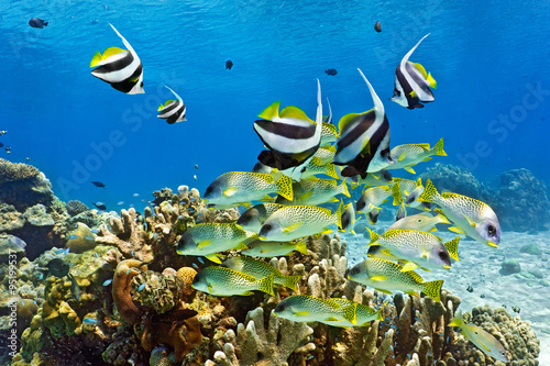 Obraz na Szkle Shoal of fish on the coral reef