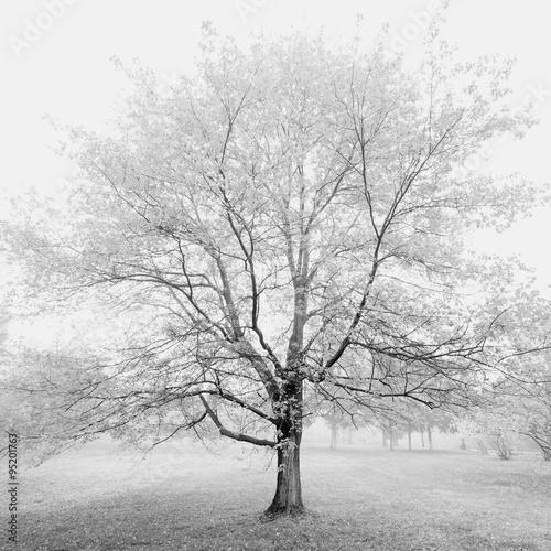 spokojne-drzewo