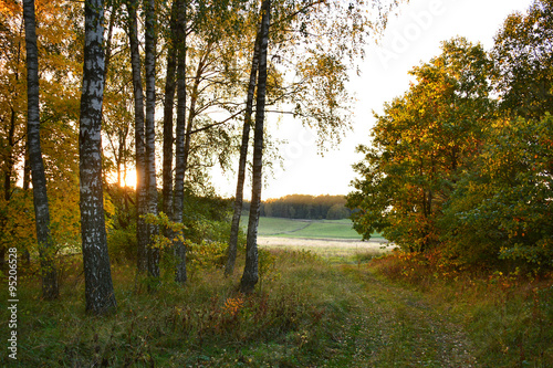 Fototapeta foggy autumn morning rural landscape