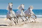 Fototapety Horses run along the coast