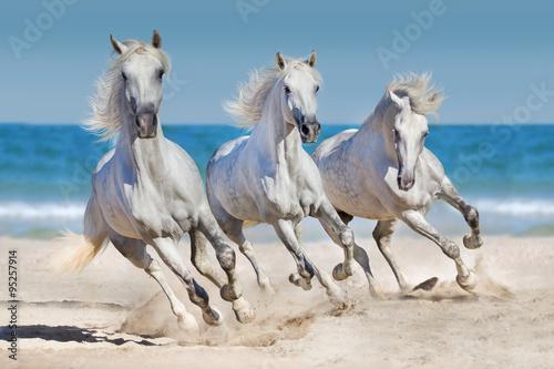 Horses run along the coast Poster