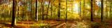 Fototapety Wald Panorama mit Sonnenstrahlen