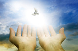 male hands over sky with Divine Light with dove like a symbol of soul, spiritual freedom, spirit and hope