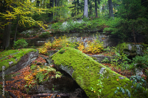 Ancient Forest Wilderness in Autumn