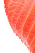 Organische Texturen - Herbstlaub