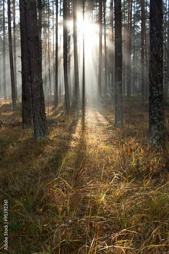 Sunlight in forest.