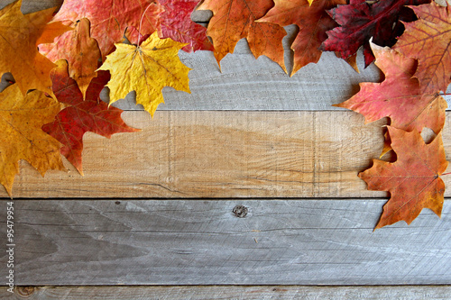 Autumn Maple Leaves Framing Rustic Wood Background