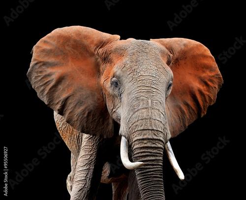 Fototapeta Elephant on dark background