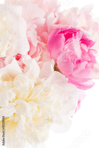 Foto op Canvas Madeliefjes peony on the white