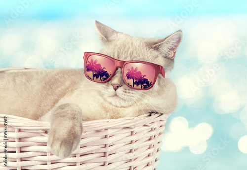 Obraz The cat in sunglasses lying in a basket on the background of the sea