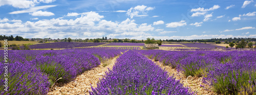 Panoramic view of lavender field and cloudy sky © Frédéric Prochasson