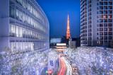 Fototapety Winter Illumination in Tokyo seen from Roppongi Hills