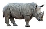 Fototapety  rhinoceros on white background