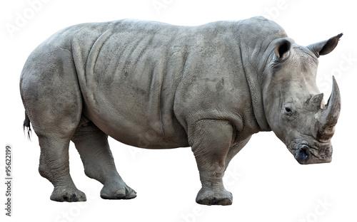 Aluminium Neushoorn rhinoceros on white background