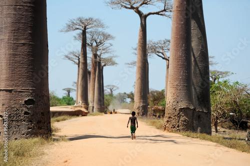 Papiers peints Baobab Avenue of baobabs