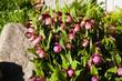 Obrazy na płótnie, fototapety, zdjęcia, fotoobrazy drukowane : орхидеи 17