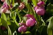 Obrazy na płótnie, fototapety, zdjęcia, fotoobrazy drukowane : орхидея 22