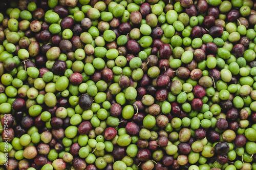Poster Raccolta delle Olive