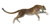 Fototapety Big Cat Cheetah