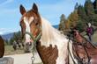 Obrazy na płótnie, fototapety, zdjęcia, fotoobrazy drukowane : Nice horses