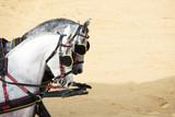 caballos negros en Doma vaquera en la feria