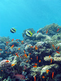 coral reef with hard coral and exotic fishes in tropical sea, underwater