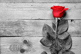 Red rose on black and white wooden background - 95876705