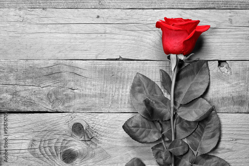 Fototapety, obrazy : Red rose on black and white wooden background