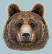 Illustrated Portrait of Bear on blue background