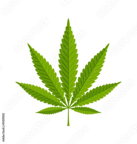 Fotobehang Planten Marijuana hemp leaf on white background
