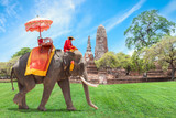 Fototapety Elephant for Tourists in Ayutthaya, Thailand.
