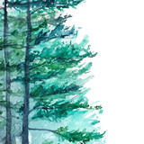 Winter wood forest pine landscape