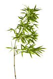 Fototapety Bamboo Isolated on White Background