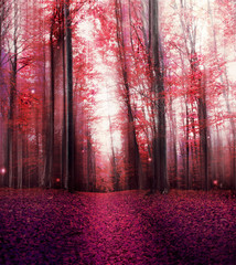 Red Magic Misty Forest with Mysterious Lights © marrakeshh