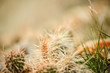grass and wheat background