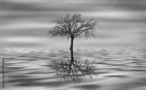 Albero riflesso nell'acqua